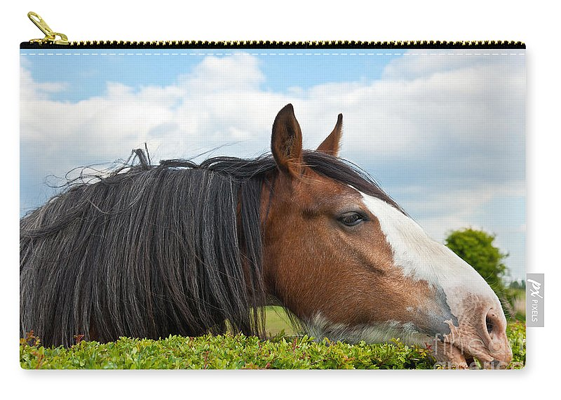 Clydesdale Horse Carry-all Pouch featuring the photograph Clydesdale Horse Munching by Liz Leyden