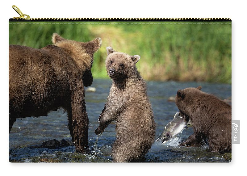 Katmai Peninsula Carry-all Pouch featuring the photograph Coastal Brown Bear Family by Justinreznick
