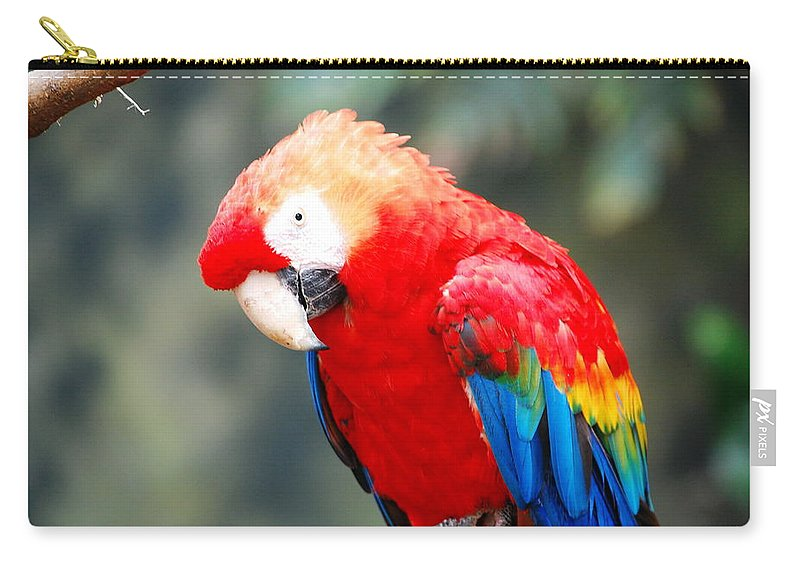 Carry-all Pouch featuring the photograph Coat Of Many Colors by Kim Blaylock