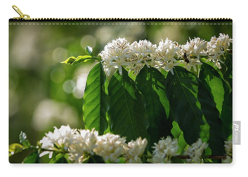 Hanging Carry-all Pouch featuring the photograph Coffee Coffea Arabia Blossoms, Kona by Alvis Upitis