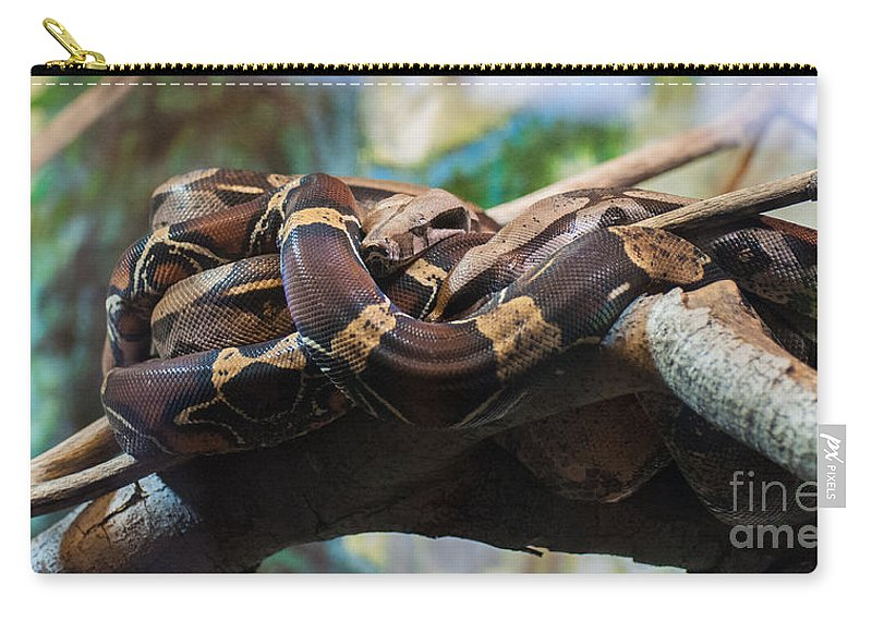 Snake Carry-all Pouch featuring the photograph Coiled by Bianca Nadeau