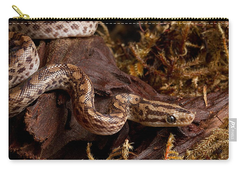 Animal Carry-all Pouch featuring the photograph Colombian Rainbow Boa Epicrates Maurus by David Kenny
