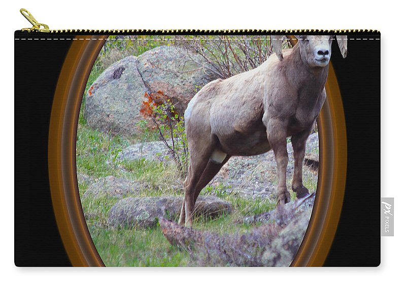 Bighorn Carry-all Pouch featuring the photograph Colorado Bighorn by Shane Bechler