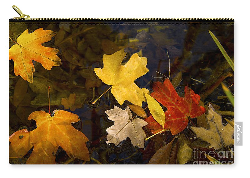 Guadalupe Mountains National Park Texas Parks Fall Autumn Leaf Maple Leaves Water Still Life Carry-all Pouch featuring the photograph Colored Floaters by Bob Phillips