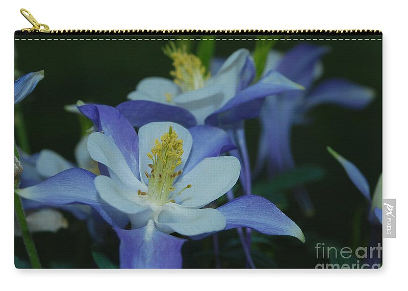 Columbine Carry-all Pouch featuring the photograph Columbine Family by Heather Kirk