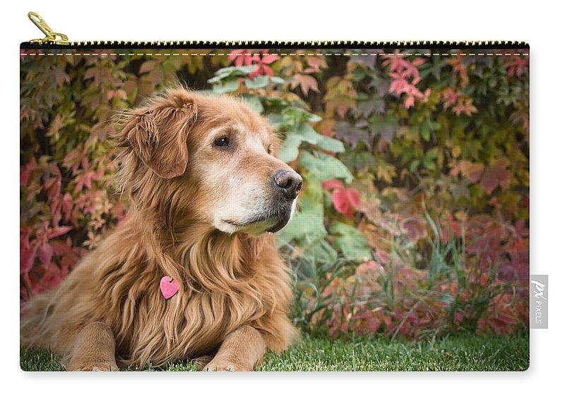 Golden Retriever Carry-all Pouch featuring the photograph Comanche Autumn - Golden Retriever - Casper Wyoming by Diane Mintle