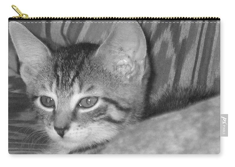 Kitten Carry-all Pouch featuring the photograph Comfy Kitten by Pharris Art