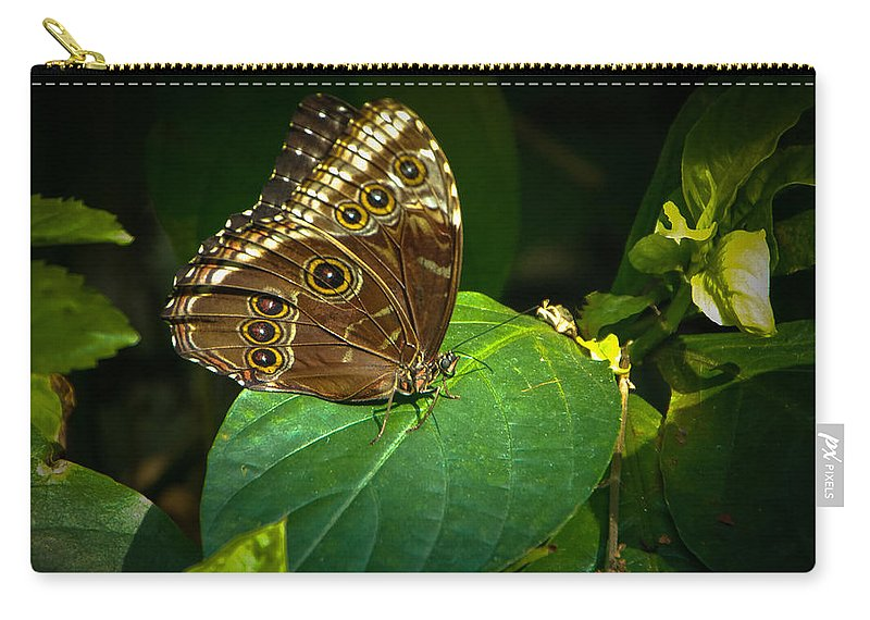 Moth Carry-all Pouch featuring the photograph Common Blue Morpho Moth by Grace Grogan