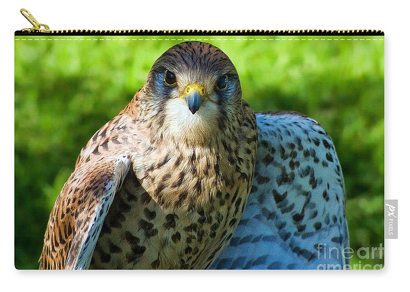 Kestrel Carry-all Pouch featuring the photograph Common Kestrel by Susie Peek