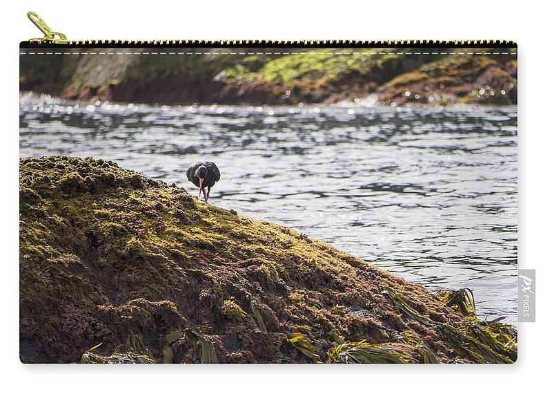 Australia Carry-all Pouch featuring the photograph Cormorant - Montague Island - Australia by Steven Ralser