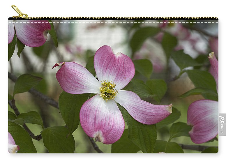 Cornus Florida Carry-all Pouch featuring the photograph Cornus Florida - Pink Dogwood Blossoms by Kathy Clark