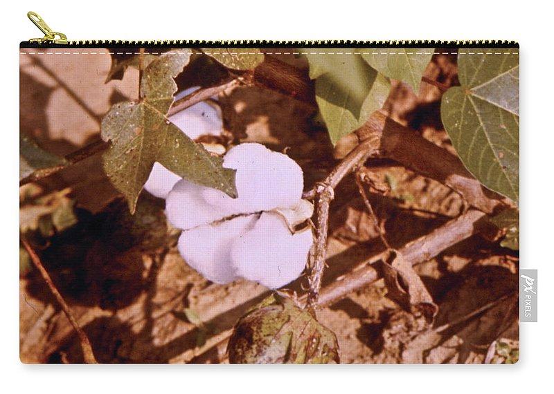 Gossypium Carry-all Pouch featuring the photograph Cotton Bolls by Douglas Barnett