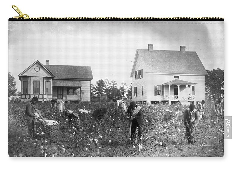 1902 Carry-all Pouch featuring the photograph Cotton Picking, 1902 by Granger