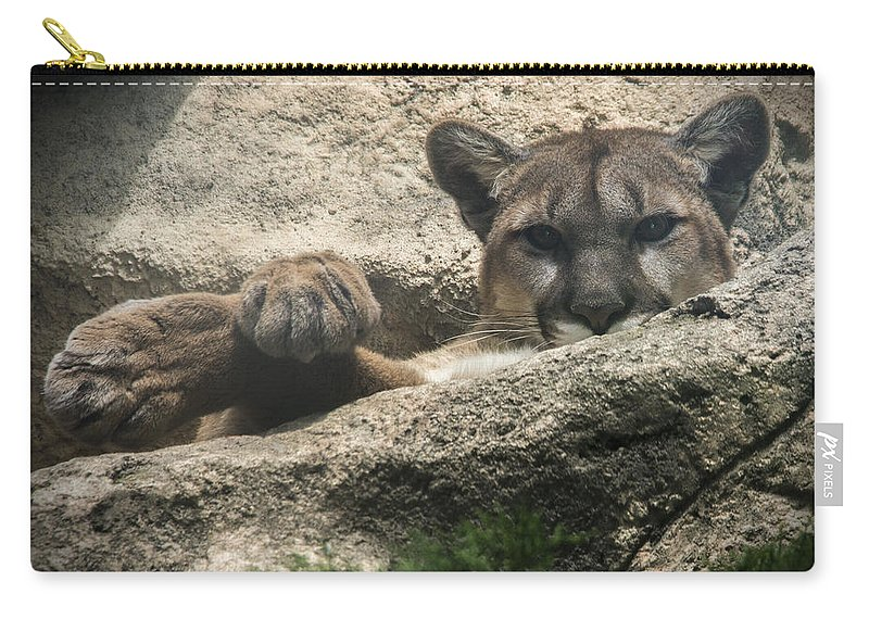 Cougar Carry-all Pouch featuring the photograph Cougar Spotted Me by Jayne Gohr