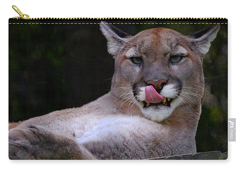 Animal Carry-all Pouch featuring the photograph Cougar Town by Davandra Cribbie