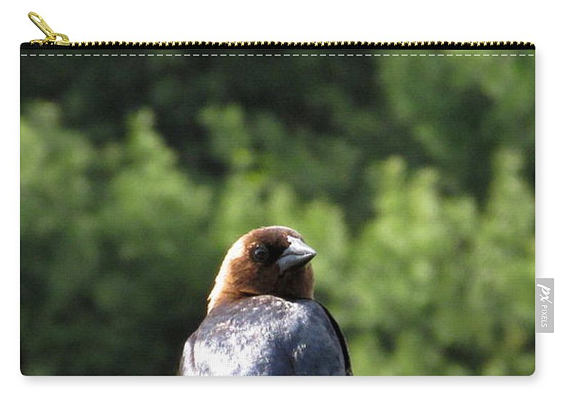 Brown Headed Cow Bird Carry-all Pouch featuring the photograph Cow Bird by Joshua Bales