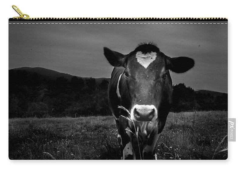 Cows Carry-all Pouch featuring the photograph Cow by Bob Orsillo