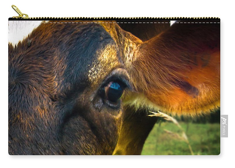 Cows Carry-all Pouch featuring the photograph Cow Eating Grass by Bob Orsillo