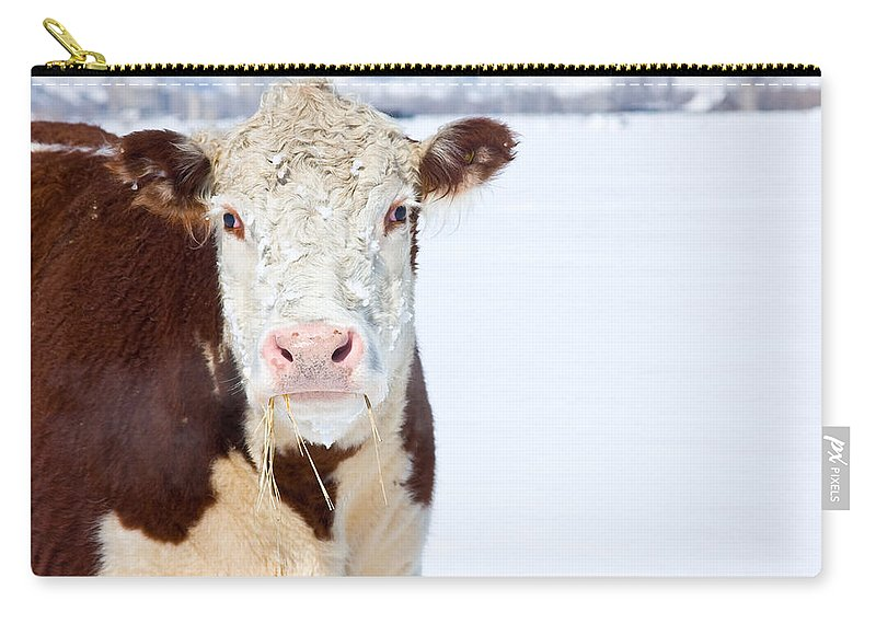 Cow Carry-all Pouch featuring the photograph Cow - Fine Art Photography Print by James BO Insogna