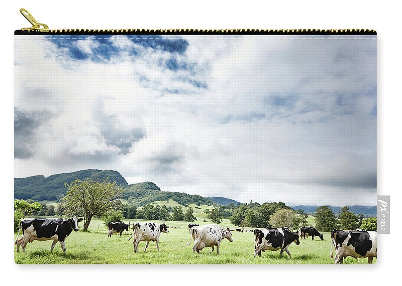 Domestic Animals Carry-all Pouch featuring the photograph Cows Walk In Beautiful Paddock by Stuart Miller