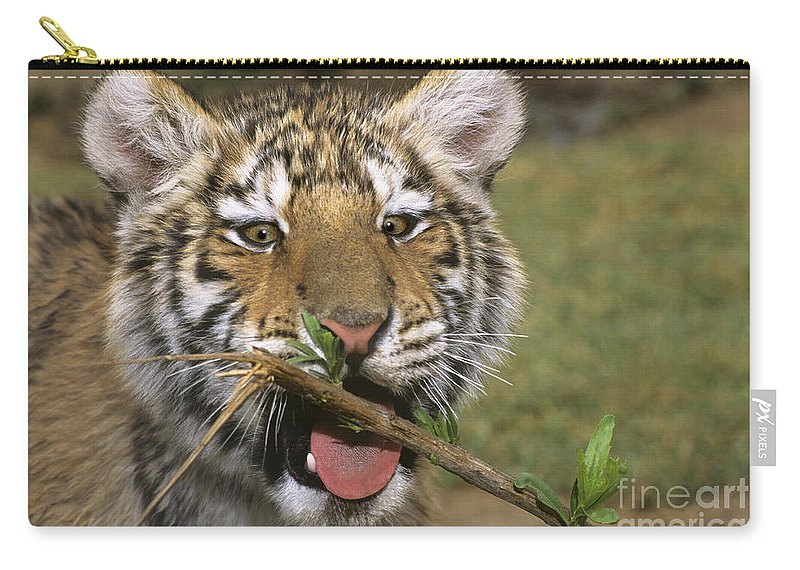 Siberian Tiger Carry-all Pouch featuring the photograph Crosseyed Siberian Tiger Cub Endangered Species Wildlife Rescue by Dave Welling