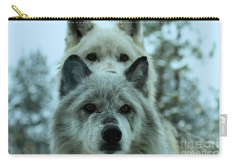 Gray Wolf Carry-all Pouch featuring the photograph Curiosity by Adam Jewell