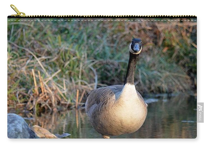 Curious Canadian Goose Carry-all Pouch featuring the photograph Curious Canadian Goose by Maria Urso