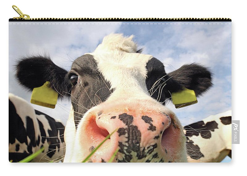Grass Carry-all Pouch featuring the photograph Curious Cow by Marcel Ter Bekke