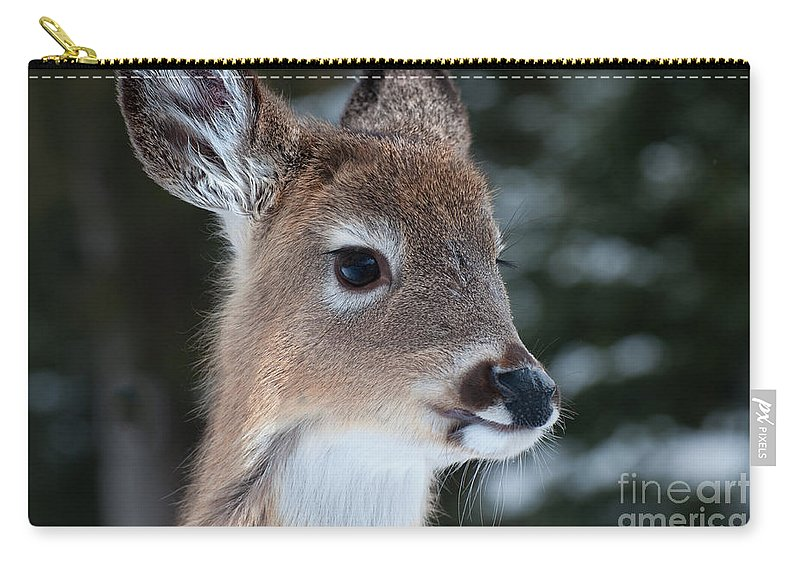 White Tailed Deer Carry-all Pouch featuring the photograph Curious Fawn by Bianca Nadeau