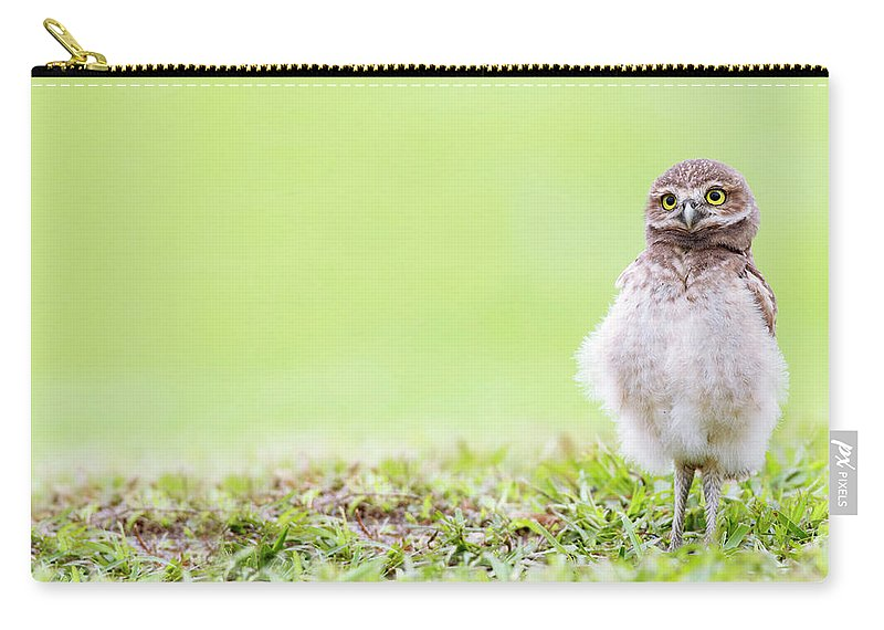 Owlet Carry-all Pouch featuring the photograph Curious Owlet by Mlorenzphotography