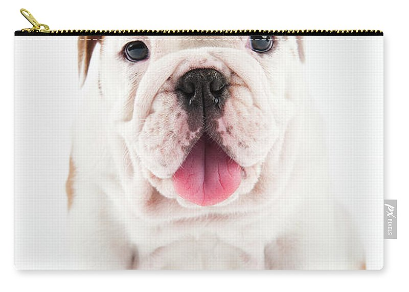 Pets Carry-all Pouch featuring the photograph Cute Bulldog Puppy On White Background by Peter M. Fisher