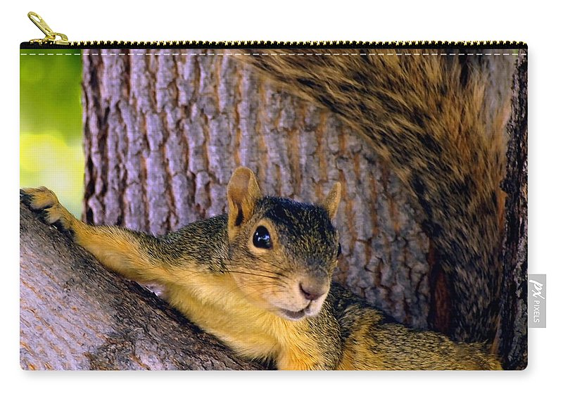 Nature Carry-all Pouch featuring the photograph Cute Fuzzy Squirrel In Tree Near Garden by Amy McDaniel