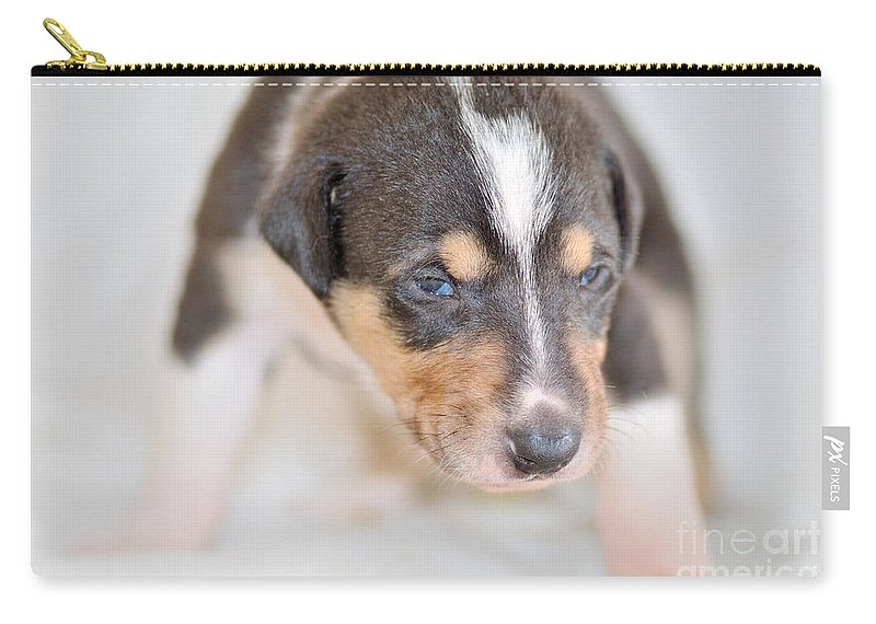 Collie Carry-all Pouch featuring the photograph Cute Smooth Collie Puppy by Martin Capek