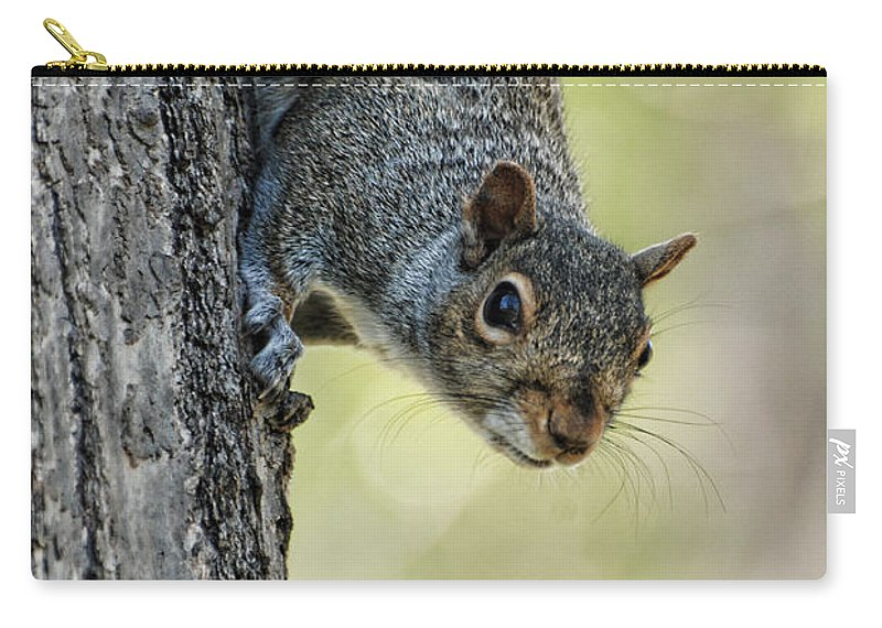 Paul Ward Carry-all Pouch featuring the photograph Cute Squirrel Dare Me by Paul Ward