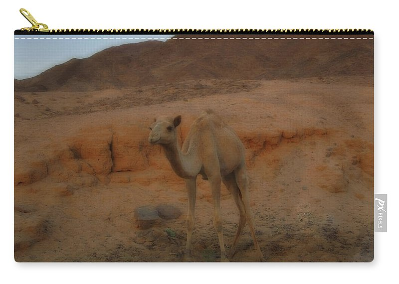 Colette Carry-all Pouch featuring the photograph Cute Young Camel Desert Sinai Egypt by Colette V Hera Guggenheim
