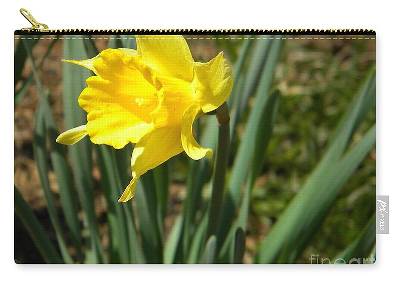 Daffodil Carry-all Pouch featuring the photograph Daffodil by Nathanael Smith