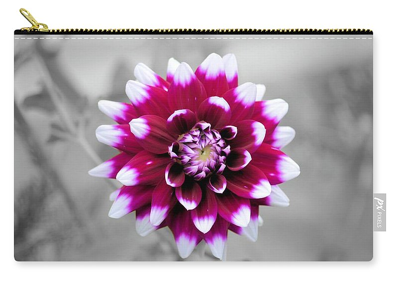 Dahlia Carry-all Pouch featuring the photograph Dahlia Flower 2 by Bonfire Photography
