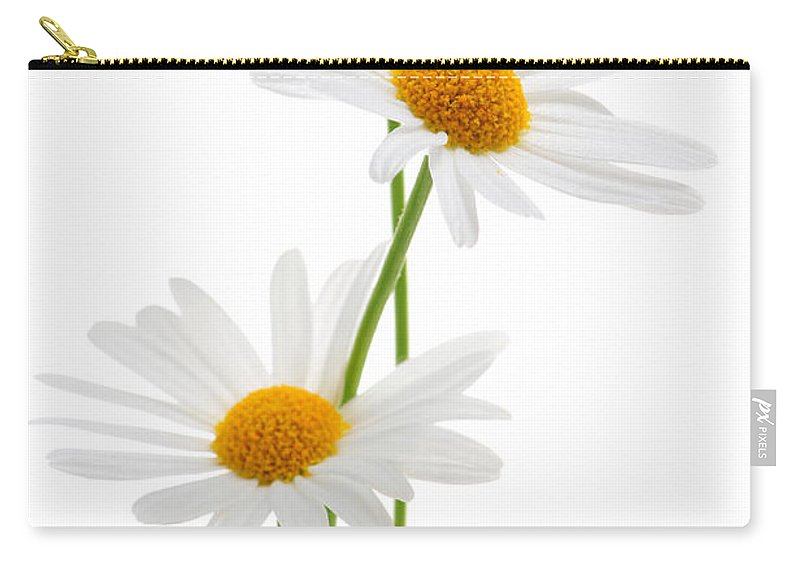 Daisy Carry-all Pouch featuring the photograph Daisies on white background by Elena Elisseeva