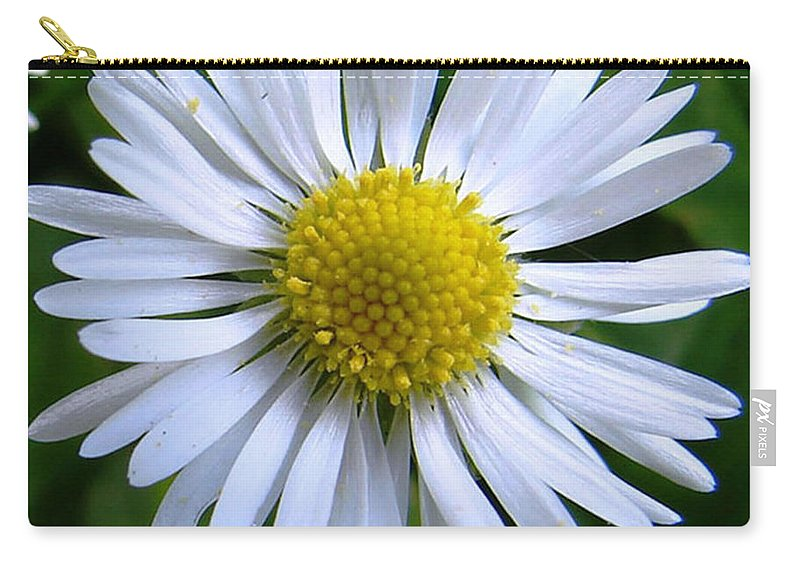 Daisy Carry-all Pouch featuring the photograph Daisy by Carol Lynch