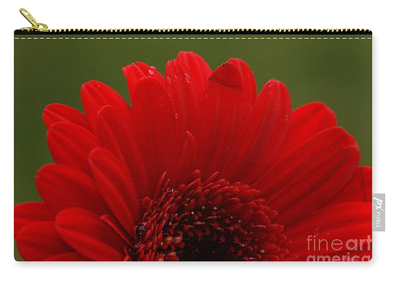 Red Carry-all Pouch featuring the photograph Daisy Red by Carol Lynch