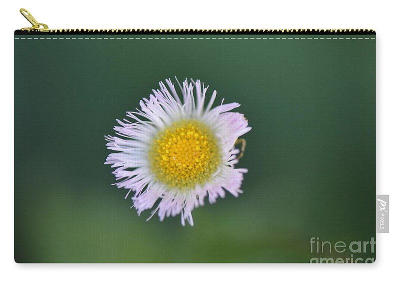 Honey Carry-all Pouch featuring the photograph Daisy Weed Series Photo B by Barb Dalton