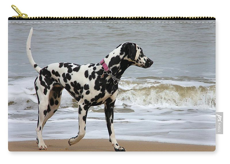 Dalmatian By The Sea Carry-all Pouch featuring the photograph Dalmatian By The Sea by Gordon Auld