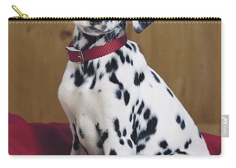 Dalmatian Carry-all Pouch featuring the digital art Dalmatian In Basket A108 by Greg Cuddiford