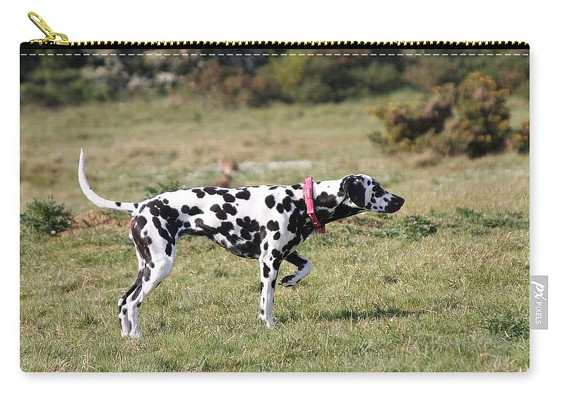 Dalmatian Pretending To Be A Pointer Carry-all Pouch featuring the photograph Dalmation Pretending To Be A Pointer by Gordon Auld