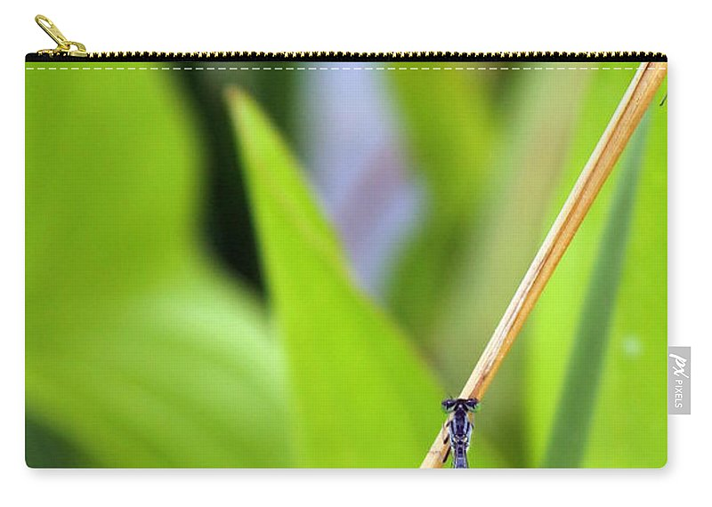 Damselfly Carry-all Pouch featuring the photograph Damselfly Female by Renee Croushore