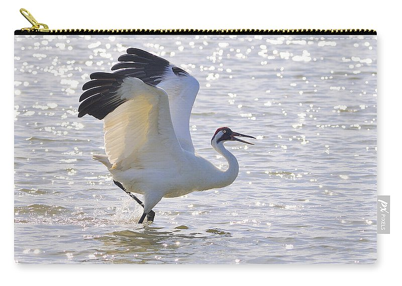 Whooping Crane Carry-all Pouch featuring the photograph Dancing For My Lady by Tony Beck