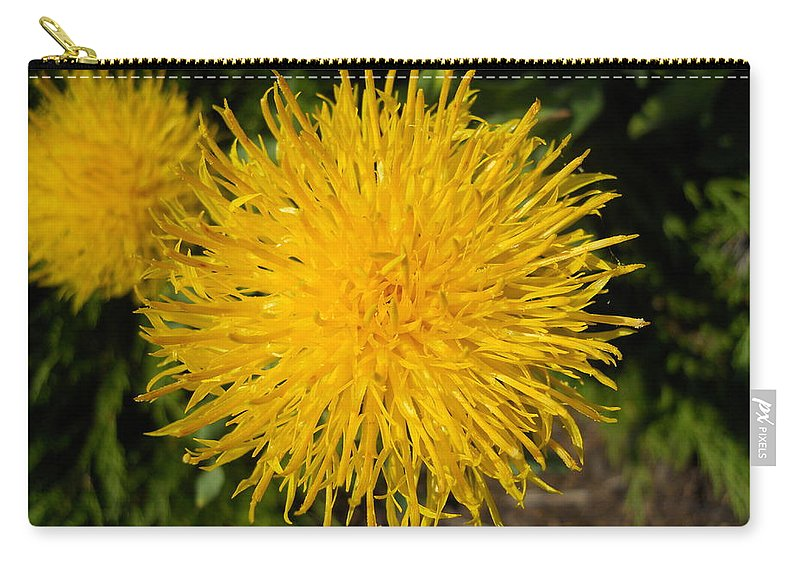 Flowers Carry-all Pouch featuring the photograph Dandelion by Coleen Harty