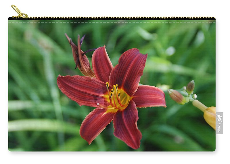 Day Lily Carry-all Pouch featuring the photograph Day Lily 3648 by Guy Whiteley