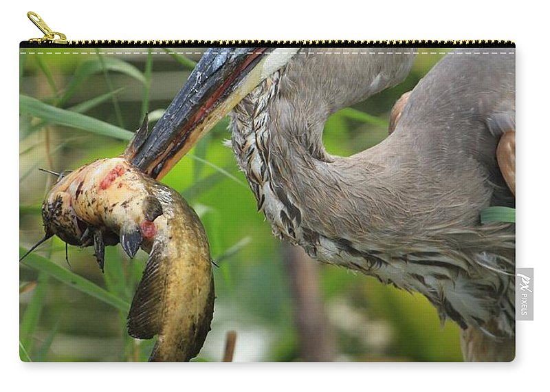 Great Blue Heron With A Fish Carry-all Pouch featuring the photograph Deadly Beak by Adam Jewell
