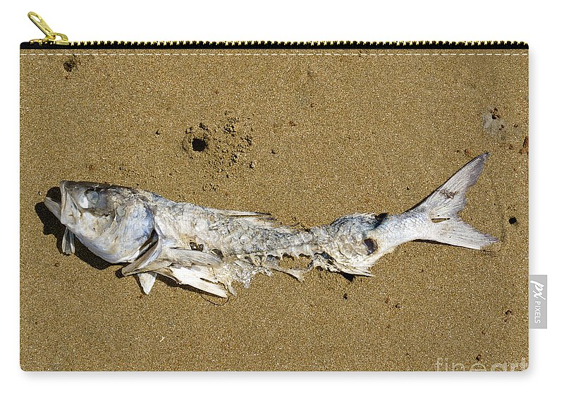 Angling Carry-all Pouch featuring the photograph Decomposing Dead Fish Carcass Washed Ashore by Stephan Pietzko